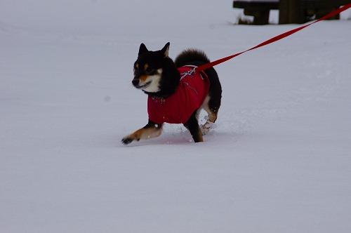 雪遊び (22)
