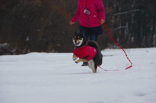 雪遊び (29)