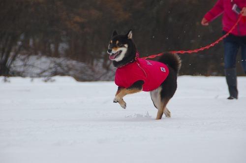 雪遊び (31)