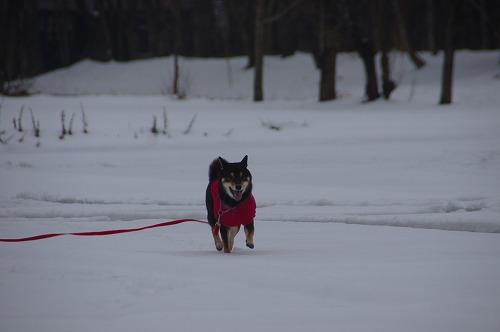 雪遊び (32)