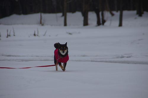 雪遊び (33)