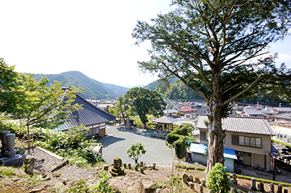 151006弘道寺のカヤ①