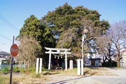 151026柏市香取神社榧⑥