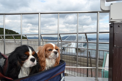 鳴門大橋と犬