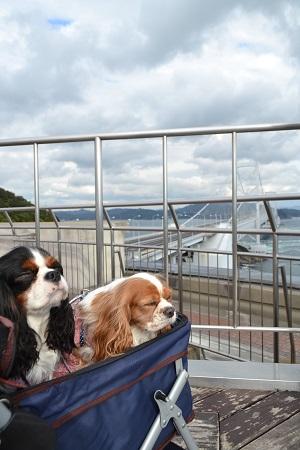 鳴門大橋と犬2