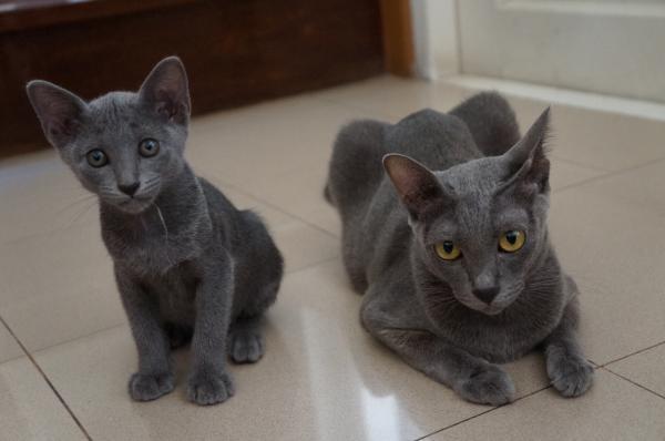 kitten & popo1