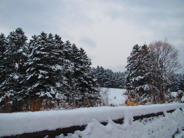 初冬 004