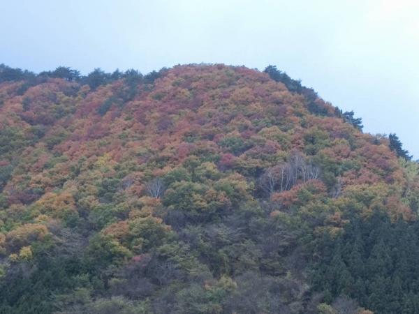 2015-11-7 群馬、栃木 046