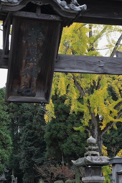 築島神社銀杏 151114 03