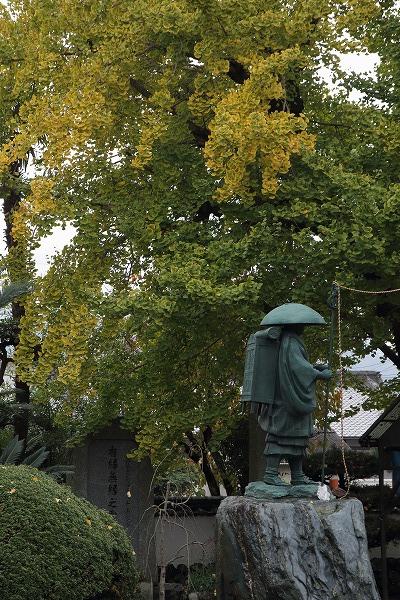道音寺銀杏 151114 04