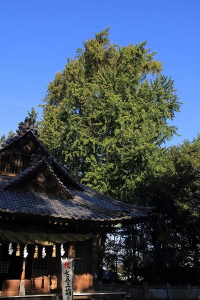 田野上方綾延神社銀杏紅葉 151120 02