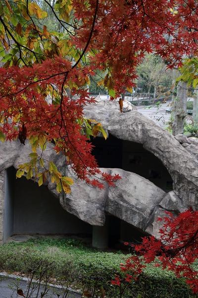 とべ動物園紅葉 151206 01