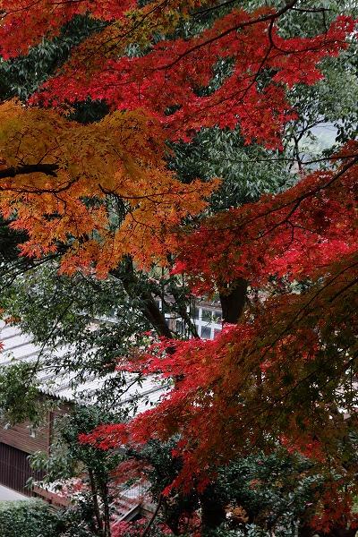とべ動物園紅葉 151206 03