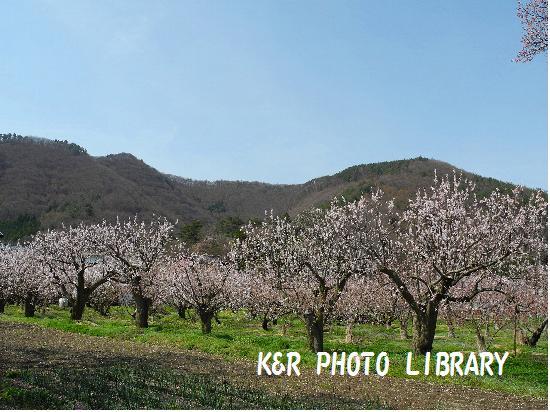 4月12日薬師山展望台1