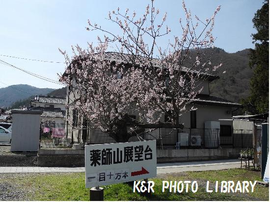 4月12日薬師山展望台3