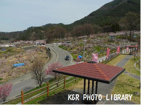 4月12日窪山展望公園