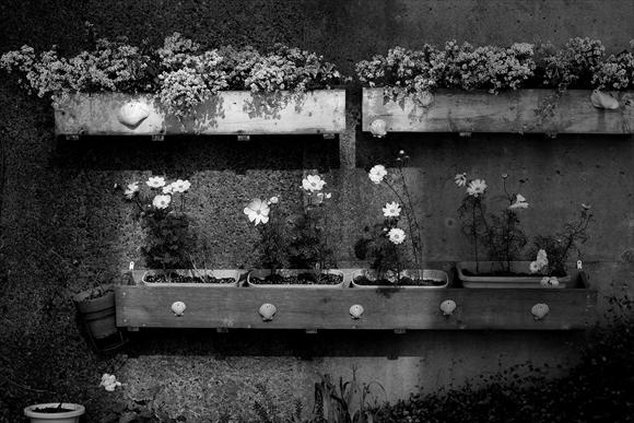 白い花-2_R