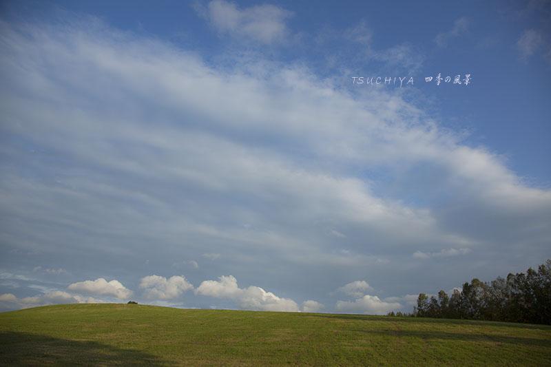 美瑛の風景 7