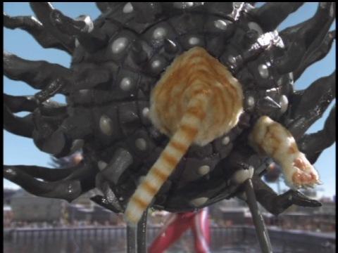 宇宙化猫 タマの後ろ姿