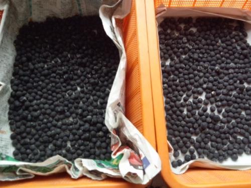 2015黒豆
