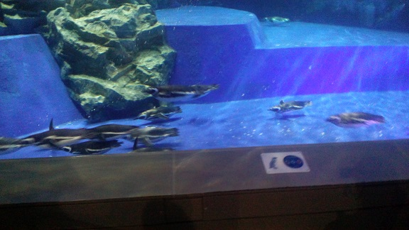 泳ぐペンギン2