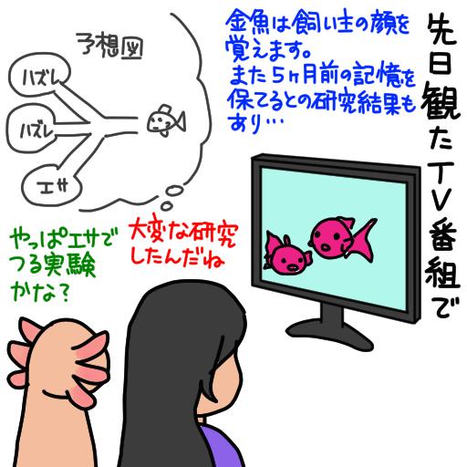 20151118金魚の知能