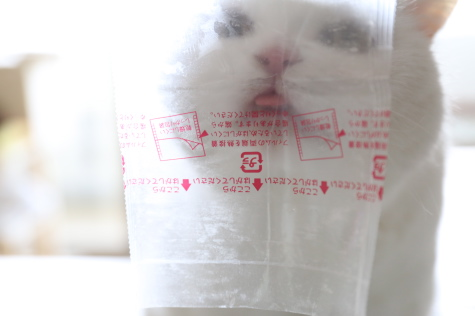 IMG_0318urabanashi.jpg