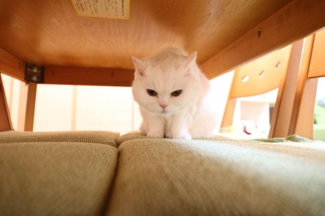 IMG_9037urabanashi.jpg