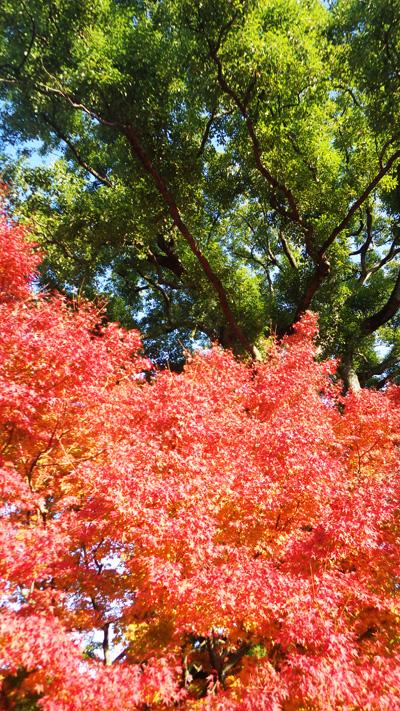 皇居東御苑の紅葉