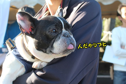 2015 羽島なまず祭り 4