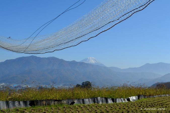 棚田から富士山2
