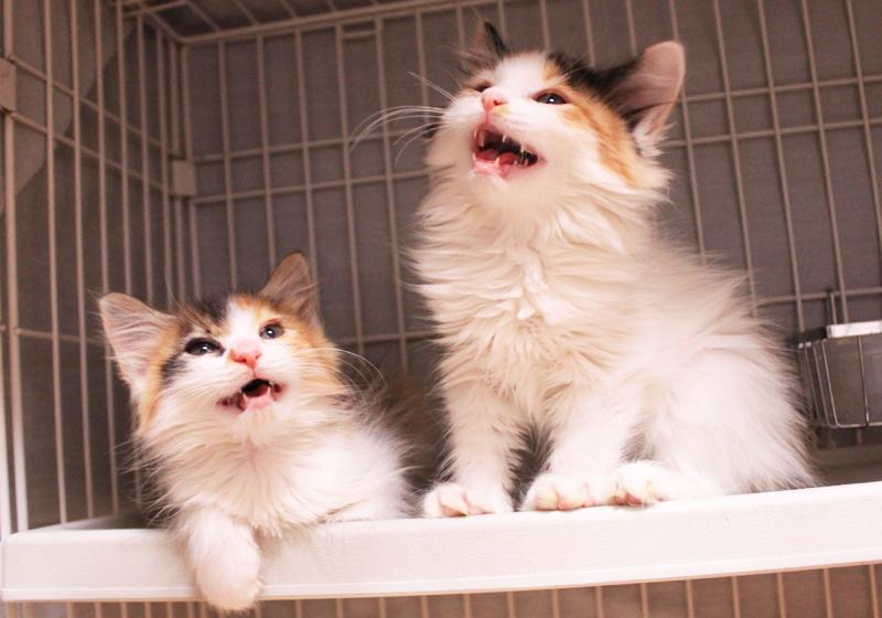 Kittens_20151107_1.jpg