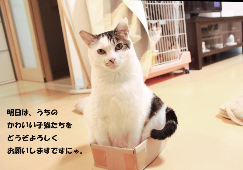 nekoyamada_20151114_2.jpg