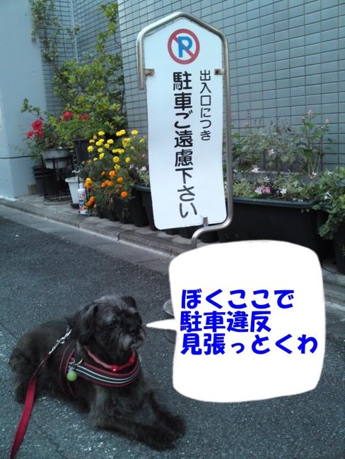 151020朝さんぽ(2)