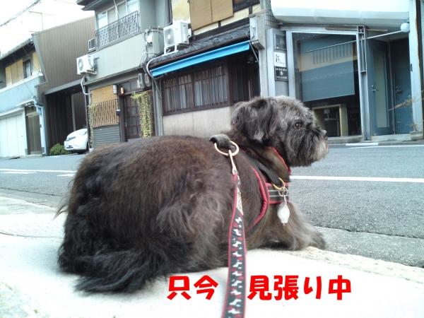 151024朝さんぽ①(2)