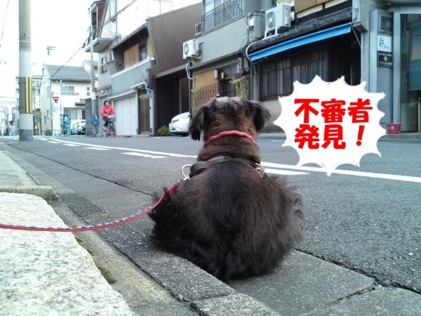 151024朝さんぽ②(2)