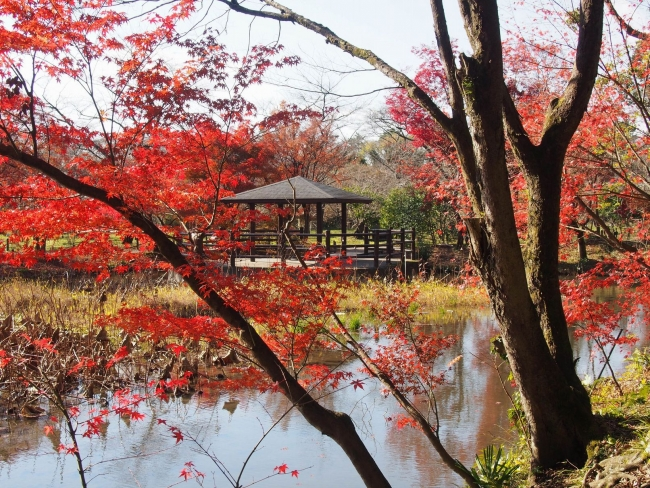 151205府立植物園・秋05