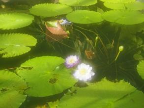 151205府立植物園・秋19温室