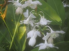 151205府立植物園・秋21温室