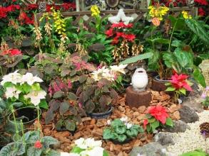 151205府立植物園・秋27温室
