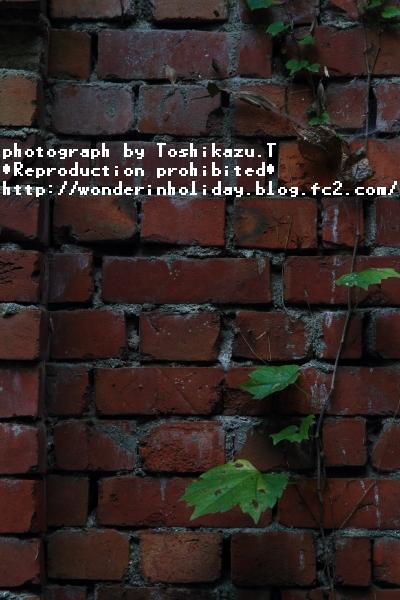IMG_7055s.jpg