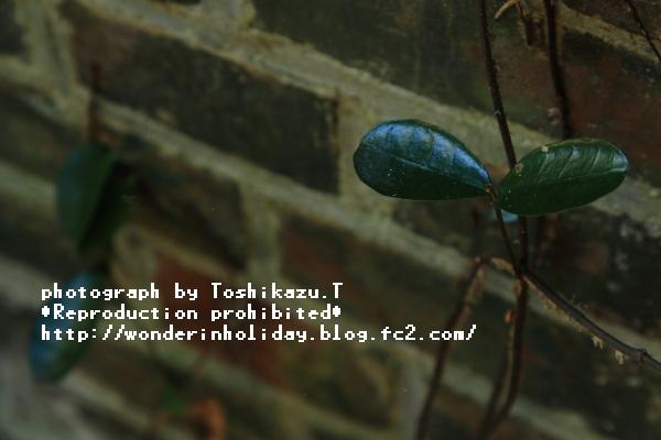 IMG_7121s.jpg