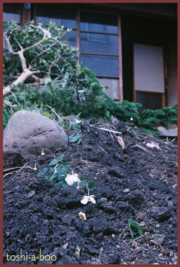 blognokoribana.jpg