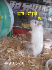 $モッサリ〜ナ-立ち上がれ俺!