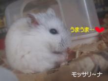 $モッサリ〜ナ-うまうま