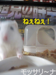 $モッサリ〜ナ-2