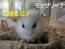 $モッサリ〜ナ-1