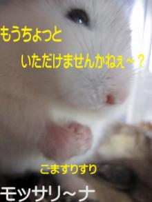 $モッサリ〜ナ-6