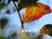 IMG_0221b.jpg