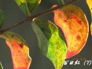 IMG_0226b.jpg